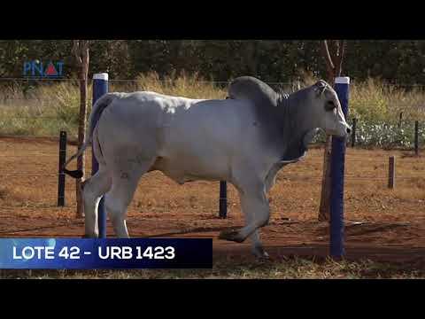 LOTE 42 - URB 1423 - NELORE