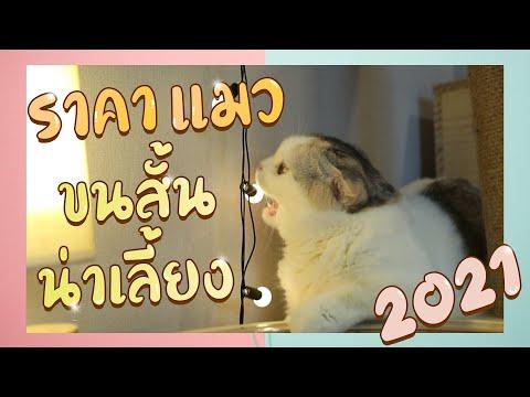 """ราคาแมว """"ขนสั้น"""" น่าเลี้ยงประจำปี 2021 +++ : EP33"""