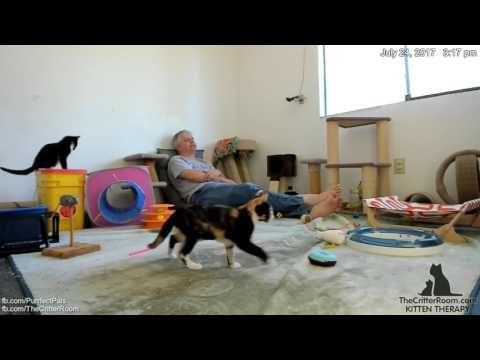 Hurricane Kittens - Afternoon 2017-07-24