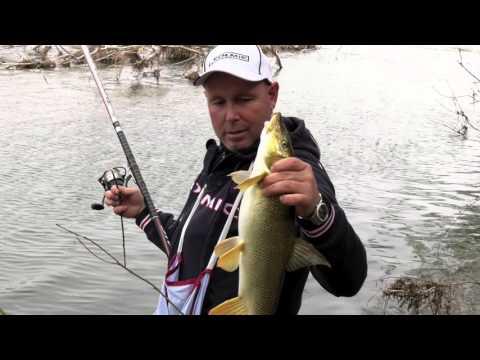 Italian Fishing TV - Colmic - Barbi con la Bolognese nel Taro