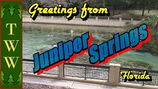 Greeting from the Juniper Springs Recreation Area in the Ocala National Forest