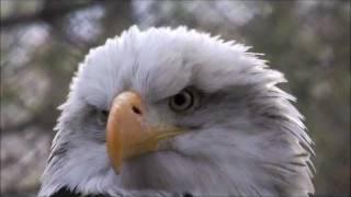 ~Vuela Aguila- Tercer Cielo~