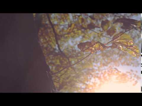 autumn 21- film footage, free download, free stock, clips, video effects