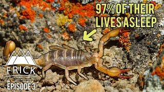 Incredible Ways Life Survives the Badlands - Rattle Snakes, Scorpions and Kangaroo Rats