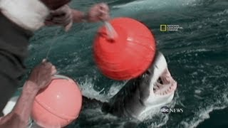 Famous People Who Died Of Shark Attack