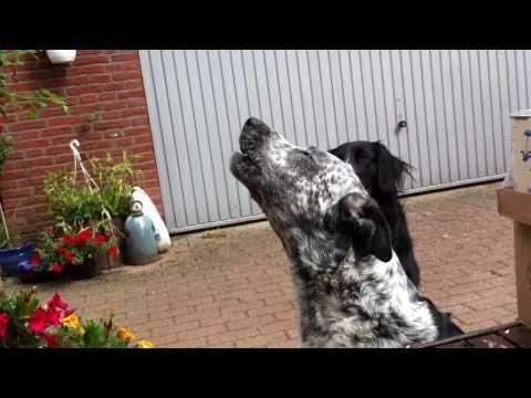 Donald vom Tierschutzhof Hannover Land e. V. singt mit Birte