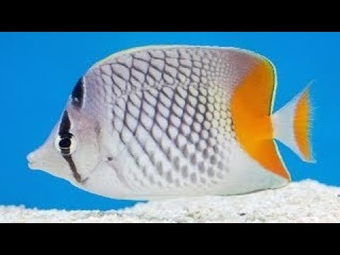 Tropical Fish Store Tours: Jans Tropical Fish Preview