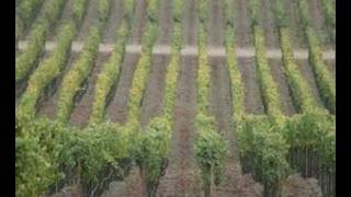Talk with Napa Sustainable Winegrowing Group Part 3 (of 5)