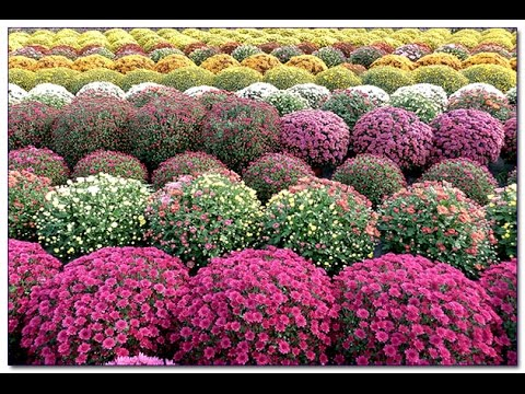 Как украсить сад фото украшений для сада своими руками