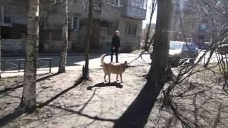 Фото Собака Воля на прогулке 4