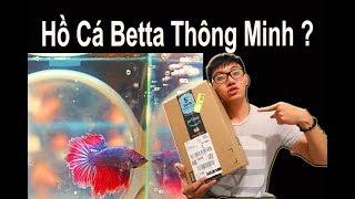 Vlog 72: Đập Hộp Hồ Cá Betta Thông Minh Tự Động Vệ Sinh Đáy Hồ