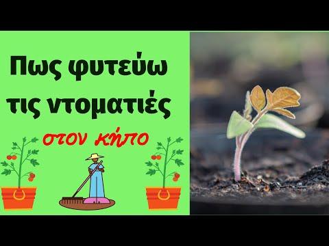 Φυτεύω Ντομάτες - Plant tomatoes