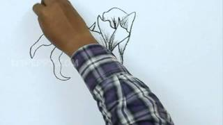 How to Draw a Flowers