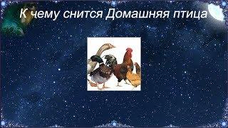 Домашняя птица — к прибавлению в семействе или к хорошей прибыли представьте, что у вас много разнообразной домашней птицы, вся она крупная, красивая и здоровая.