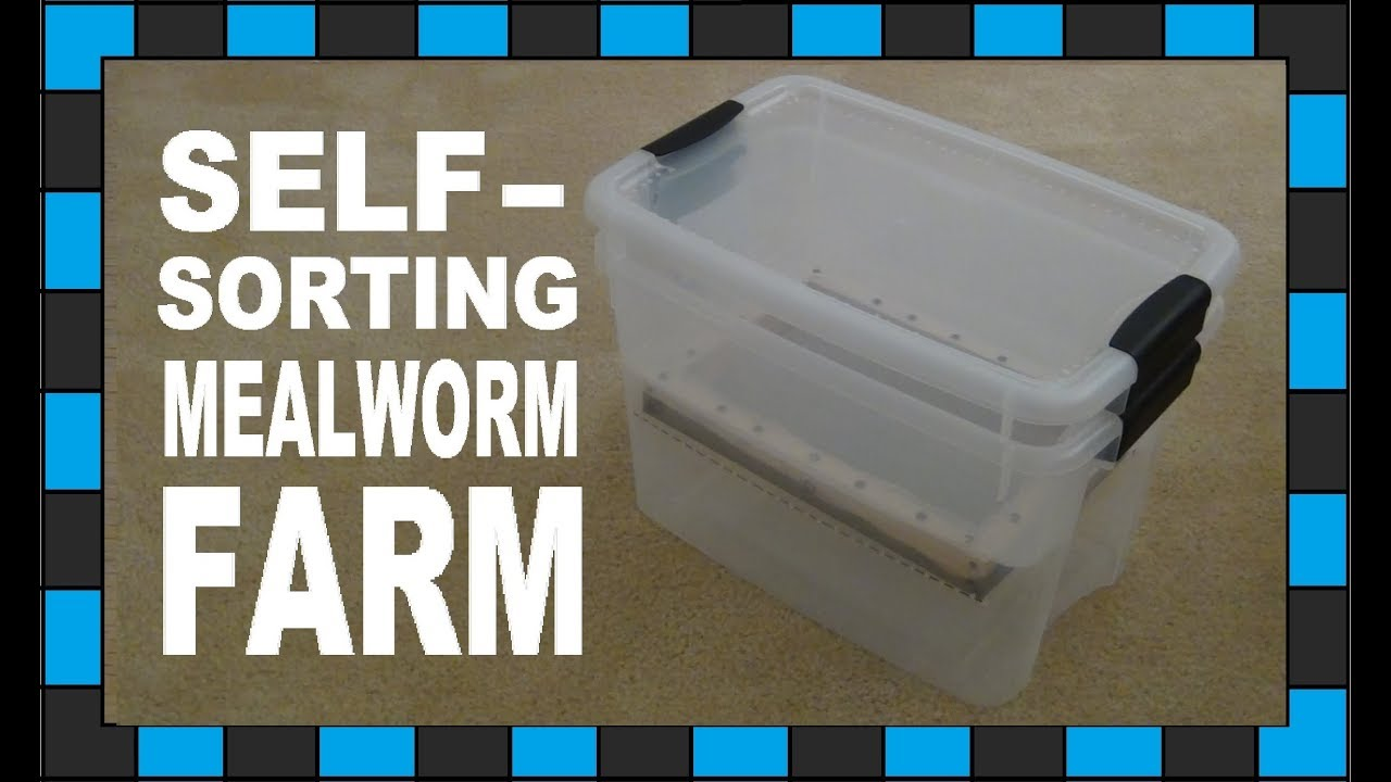 How To Build A Mealworm Farm Youtube
