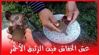 عش الخفاش فيه الزئبق الاحمر