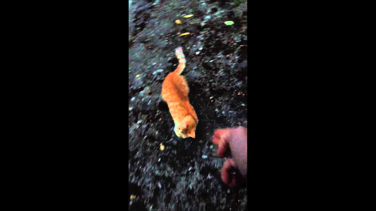 A guy kill his own cat !!