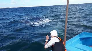 Огромный кит поплыл к лодке!