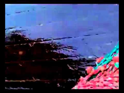 Tiburon enorme puerto deseado