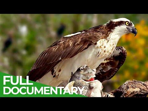 Croatia's Secret Animal Paradise | Free Documentary