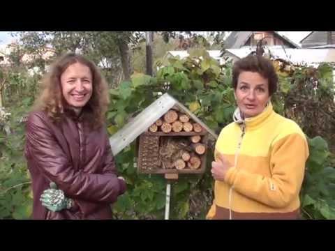 Как привлечь в сад полезных насекомых