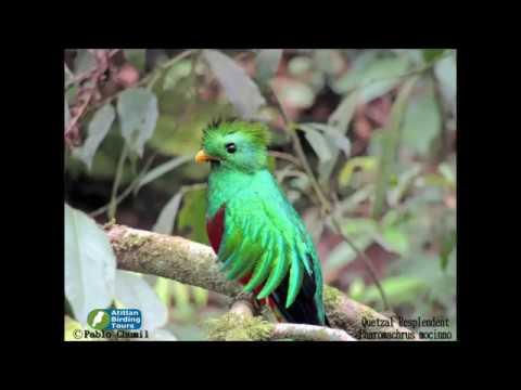 Quetzal Resplendent Tour, Guatemala Birdwatching
