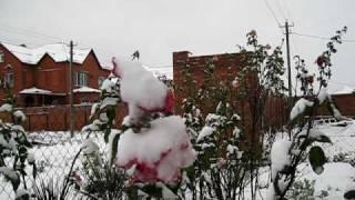 Розы под снегом.(, 2009-12-14T09:03:08.000Z)
