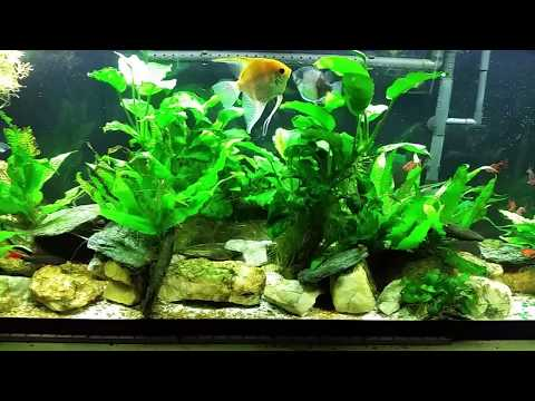 I Lost Fish To Oxygen Deprivation; But Why Was The O2 Level So Low?