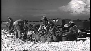 Cemetery of United States Marine Corps at the US Military base in Saipan in Maria...HD Stock Footage