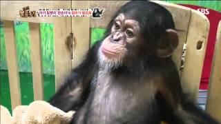 TV 동물농장 612회 #12