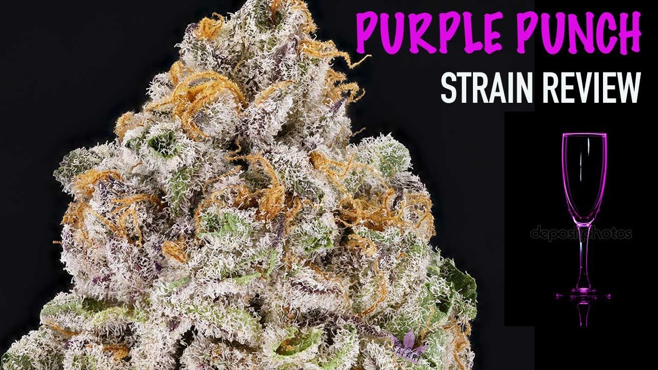 Purple Punch Strain Review - Everything You Need to Know and