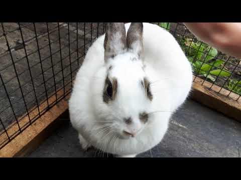mijn lieve konijn aaien #2