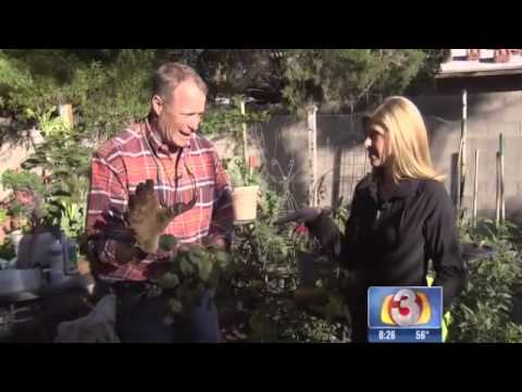Garden Guy Shares Tips For Cold Weather Gardening