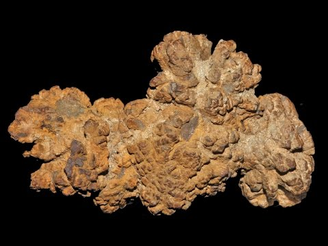 Coprolite Chemistry - what fossilised faeces can tell us abo
