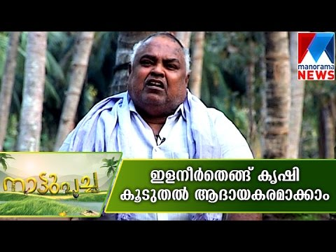Success story in tender coconut farming | Manorama News | Nattupacha