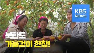 [북한 영상] 가을걷이 한창인 북한 / KBS뉴스(News)