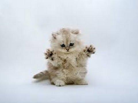 Ах, уж эти кошки! (Oh, those cats!)