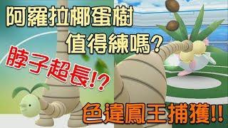 【Pokémon Go】XX上有臉!? 阿羅拉椰蛋樹強嗎? 色違鳳王捕獲!!