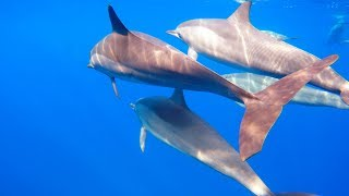 Swimming With Dolphins Le Morne Mauritius