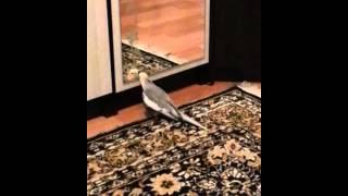 """Попугай Филя говорит: """"Дай поцелую"""""""