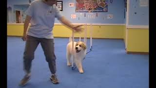 Xander's Trick Dog Champion video submission