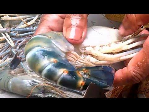 Indian prawns cleaning and cutting | Big prawns