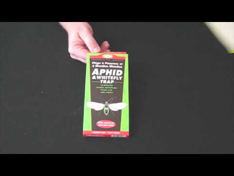 Aphid Whitefly Thrip Trap