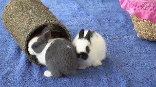KRÓLIK – Mowa ciała królika (cz. II)