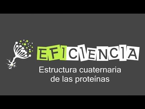 Estructura Cuaternaria De Las Proteínas Protómeros Dímeros