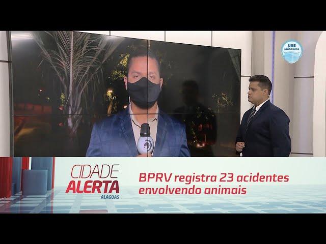 BPRV registra 23 acidentes envolvendo animais nas estradas em 2020