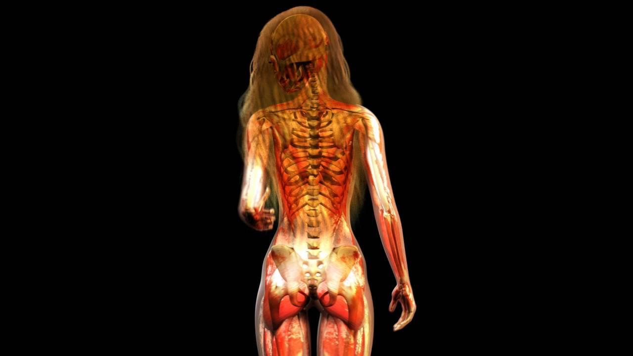 Видео анатомия женщины салой — pic 3
