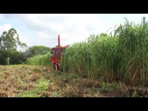 napier grass harvesting working video  of forage harveser machine
