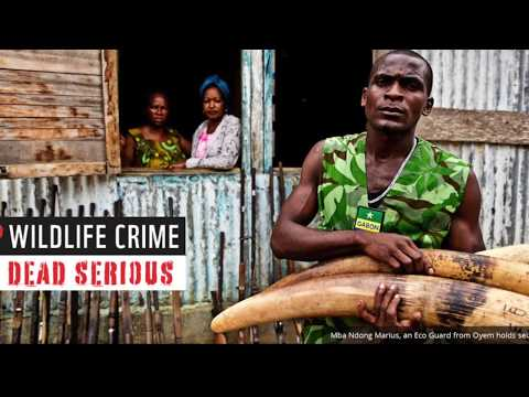 PolicyBrief: Dismantling Wildlife Trafficking and Poaching in Africa