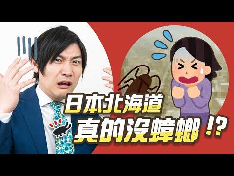 北海道沒蟑螂是都市傳說?5個令人超意外的北海道冷知識